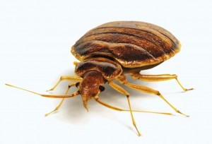 bedbug-exterminators-wichita