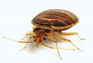 bedbug-exterminators-wichita