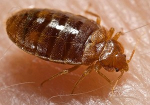 Bellevue Ne Bed Bug Control