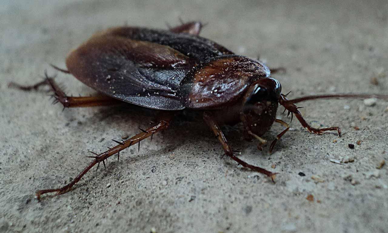Roach Control Omaha