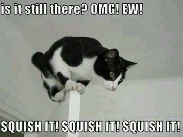 pest-control-cat