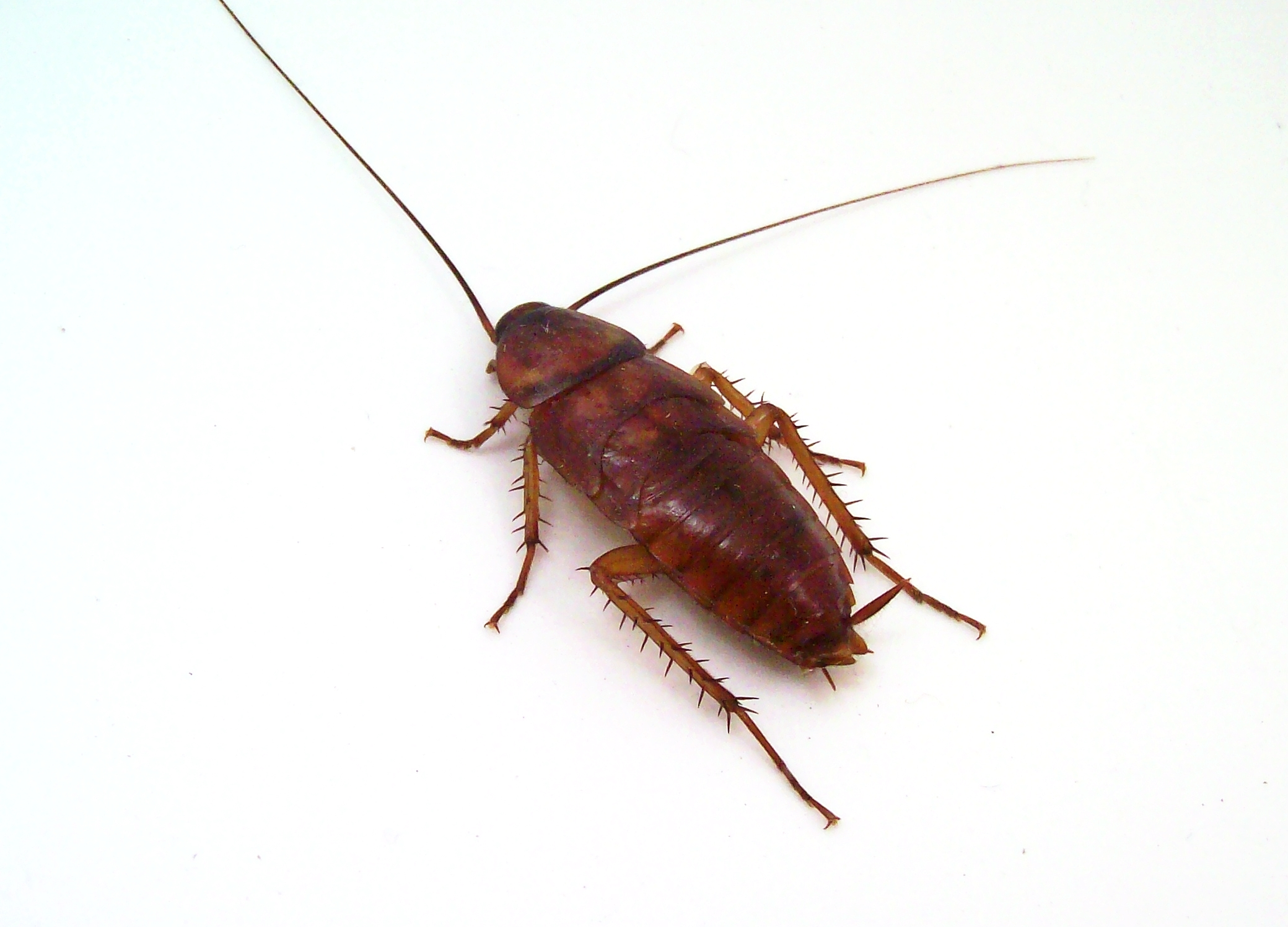 stockvault-cockroach107972