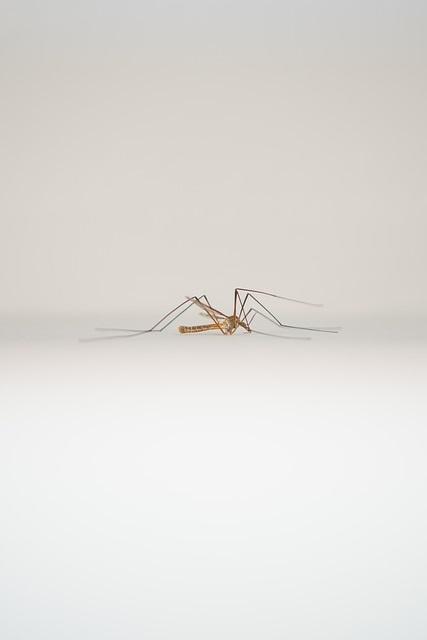 mosquito-2293824_640